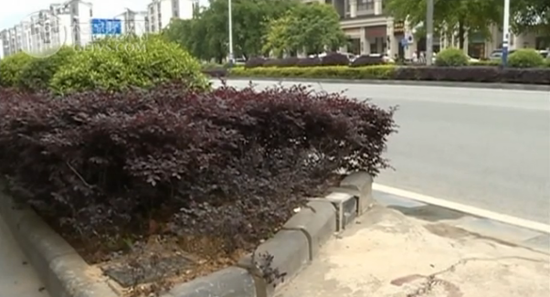 【创城再出发・曝光台】建干北路:道路私开路口 绿化带遭破坏