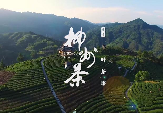 柳州茶系列作品01