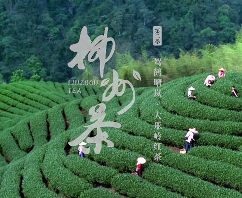 柳州茶系列作品04
