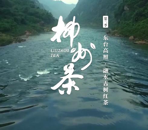 柳州茶系列作品03