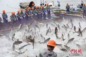 """浙江千岛湖""""巨网捕鱼"""" 万鱼跃起"""