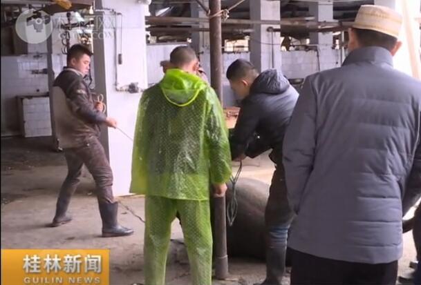 2019年春节回民跌牛仪式举行