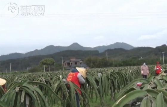 恭城:志愿服务助力疫情防控和脱贫攻坚
